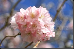 Flowers_2010_10_02_IMG_1466