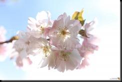 Flowers_2010_10_02_IMG_1472