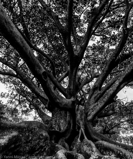 Tree: Model: www.minh-ly.com